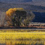 Pahranagat_National_Wildlife_Refuge-Image-Credit-USFWS-940-150x150