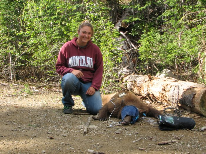 CSKT Wildlife Biologist Kari Eneas with bear