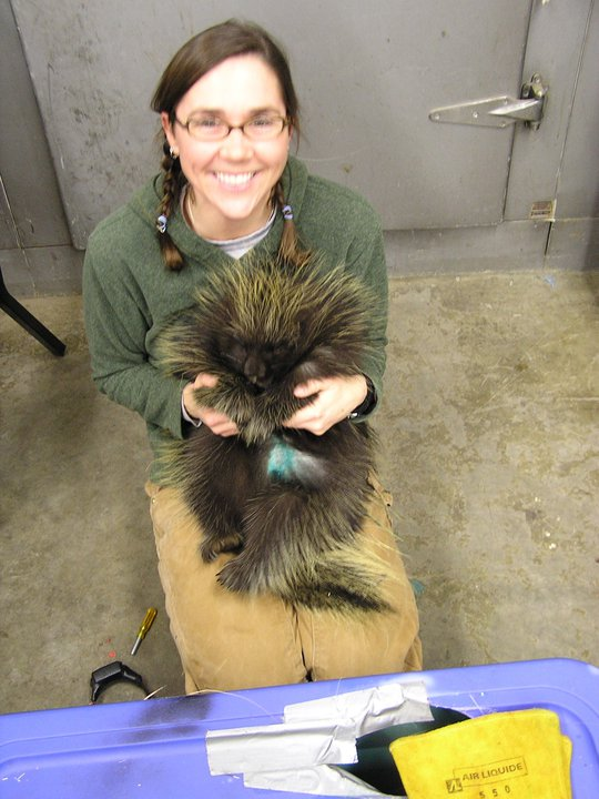 Jessy Coltrane with porcupine