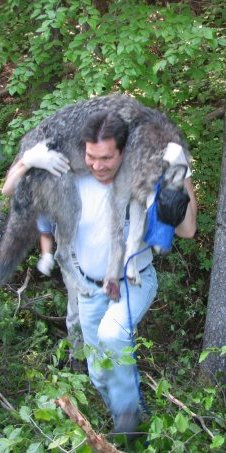 Kent carrying a wolf