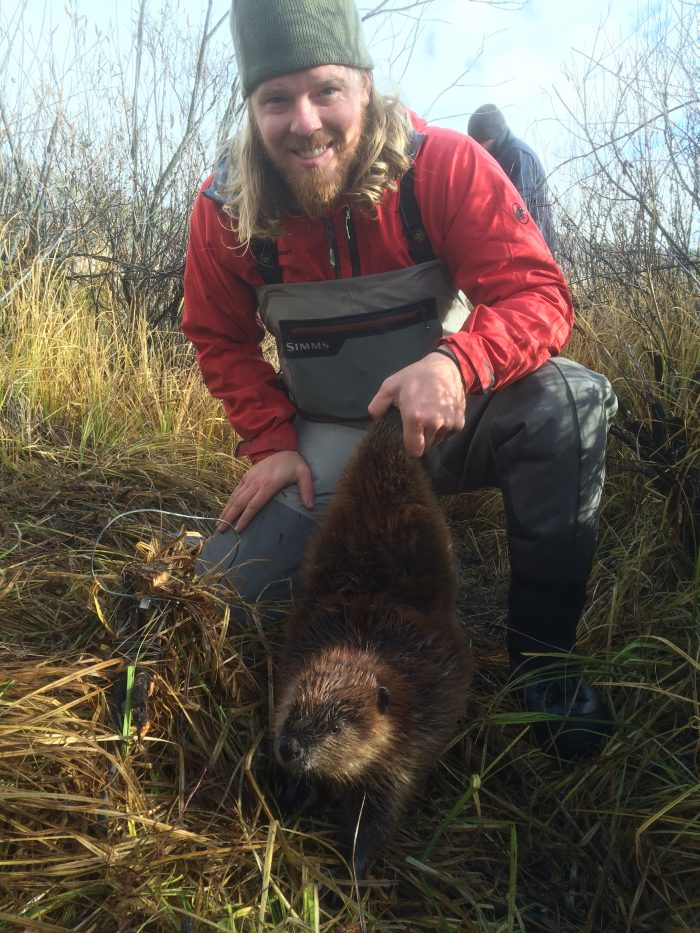 Leif Halverson with beaver kit at Grayling Creek in the Hebgen Lake Basin