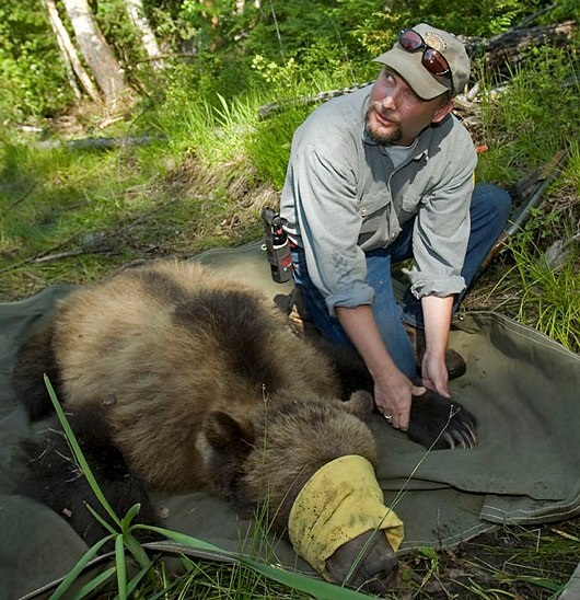 Manley with subadult male grizzly