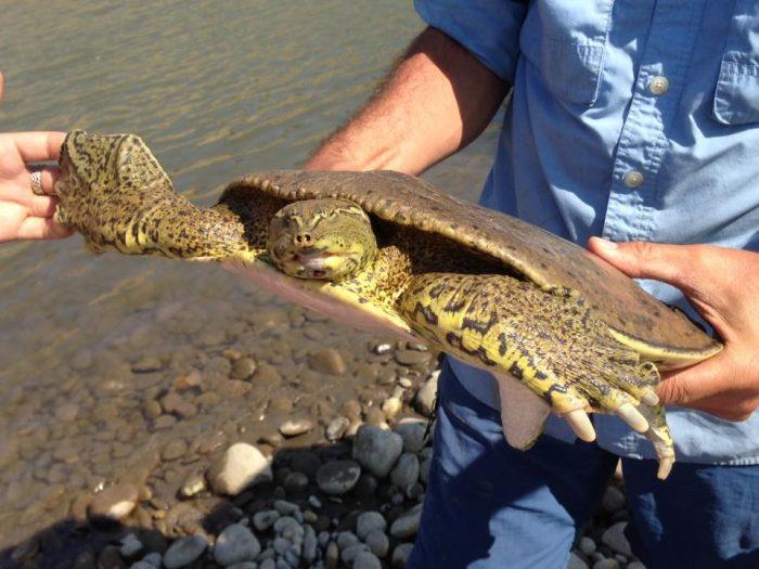 R5 turtle
