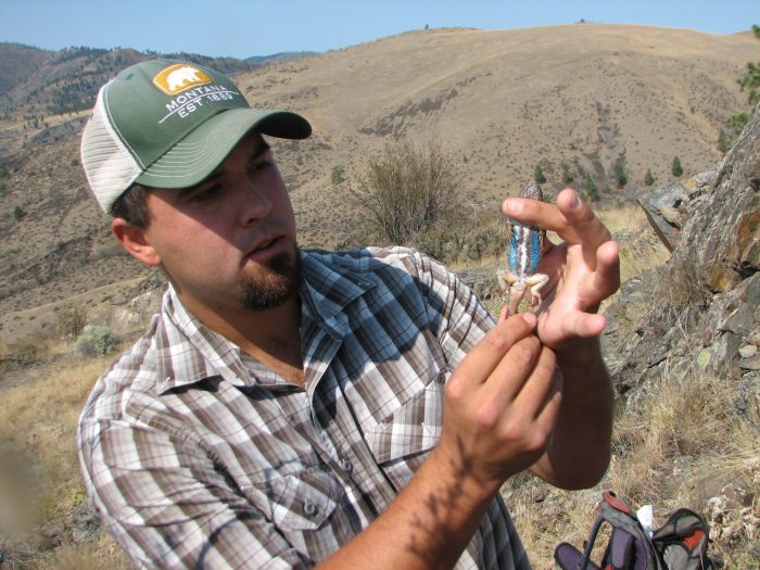 Ryan Adams, CSKT Wildlife Biologist with Western Fence Lizard