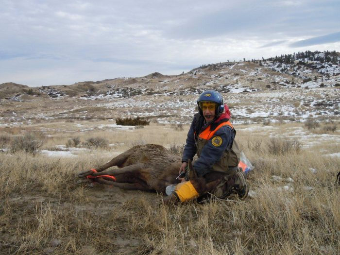 S Thompson collaring cow elk Breaks 2-2013